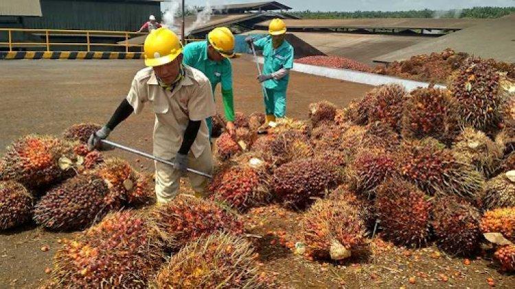 Putusan perjanjian Swiss sangat menentukan Penurunan Harga Minyak Kelapa Sawit