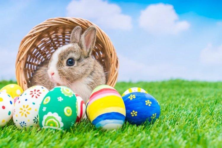Mengapa Hari Raya Paskah Selalu Identik Dengan Telur dan Kelinci? Apa Hubungan Dari Keduanya?