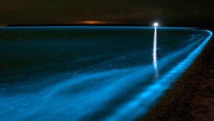 Menakjubkan! Pantai Selatan Jawa Tampak Glowing